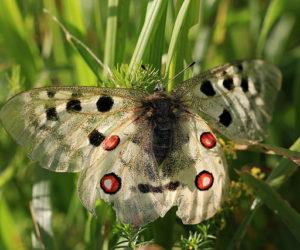 Les espèces animales protégées des Monts du Cantal